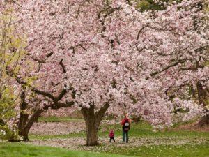 The-New-York-Botanical-Garden-Bronx-NY