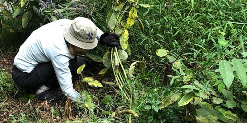 Invasive Plant Removal on the Bronx River Reservation
